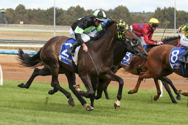 Highly Recommended Strikes 3YO Winner in Australia